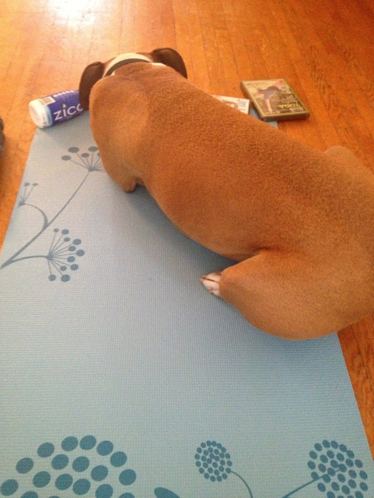 Gaiam Canada Downward Dog